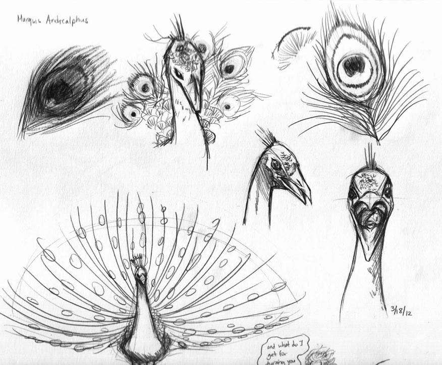 Peacock Dancing Sketch Image